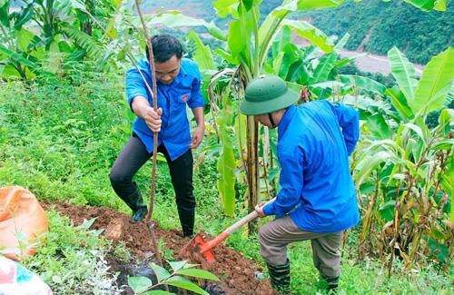 Thanh niên Sơn La tích cực tham gia phát triển kinh tế - xã hội