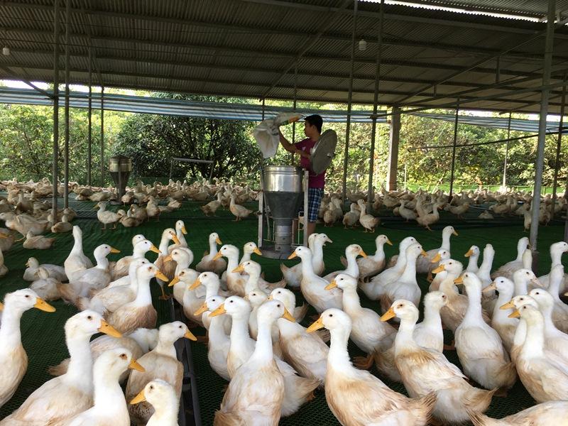 Đồng Nai Tăng trưởng ngành chăn nuôi chỉ đạt 3,1 do dịch bệnh