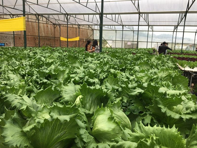 Tây Ninh Thu từ sản xuất nông nghiệp hơn 26 nghìn tỷ đồng
