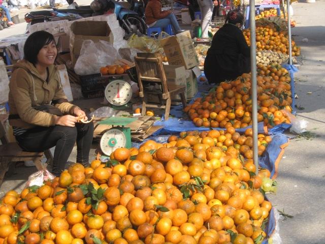 Xúc tiến thương mại, quảng bá sản phẩm cam sành Hà Giang