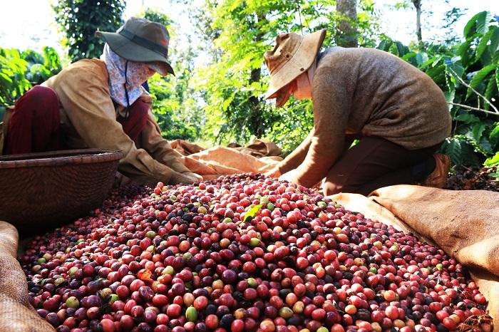 Phát triển thị trường xuất khẩu cà phê Việt Nam năm 2020