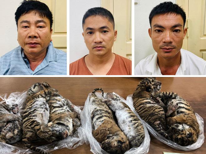 """6 năm tù cho """"ông trùm"""" buôn bán hổ xuyên quốc gia"""