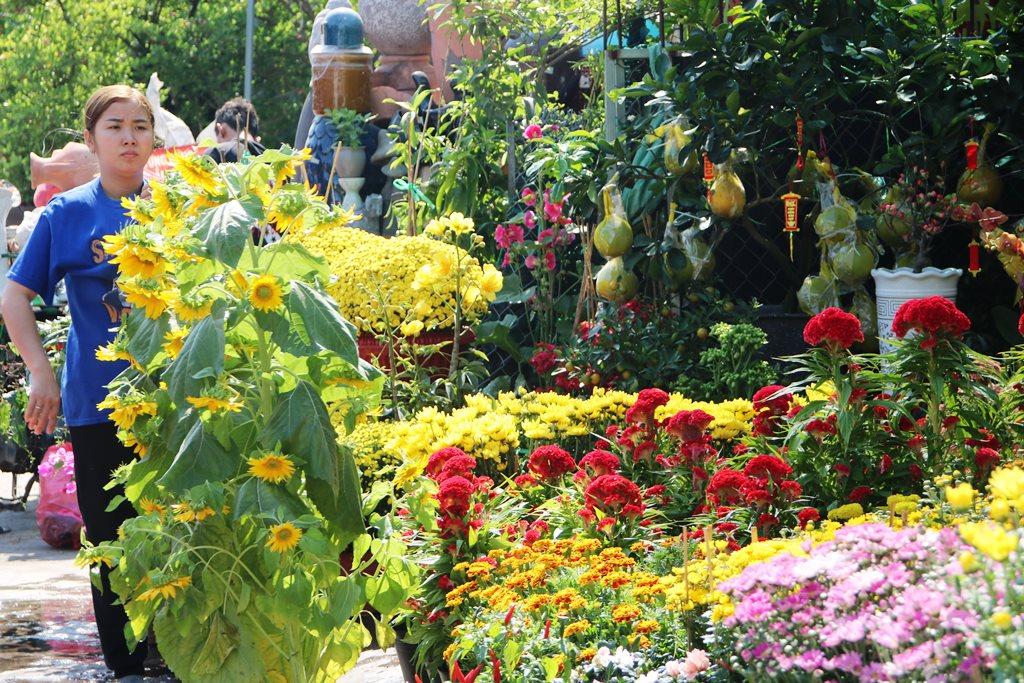 Hội hoa Xuân TP Hồ Chí Minh Điểm hẹn chào đón du khách