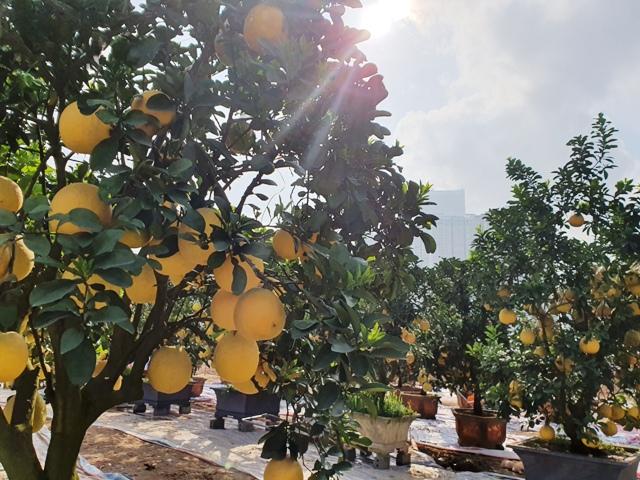Để nông sản Việt mở rộng thị trường