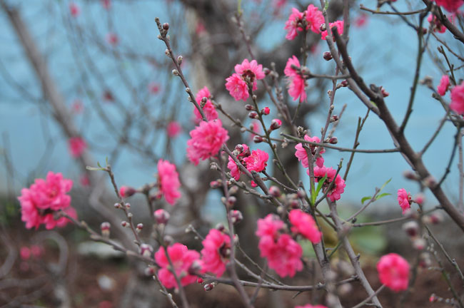 Nét đẹp mùa Xuân
