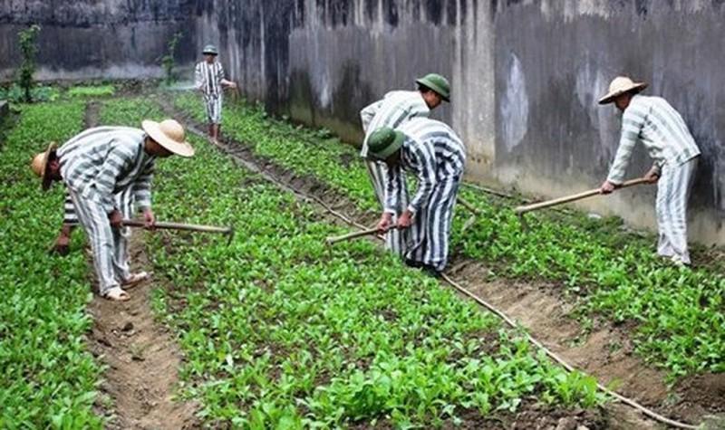 Tây Ninh Giảm thời hạn chấp hành án phạt tù cho 622 phạm nhân