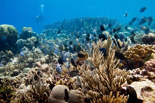 Báo động về rạn san hô lớn thứ hai thế giới