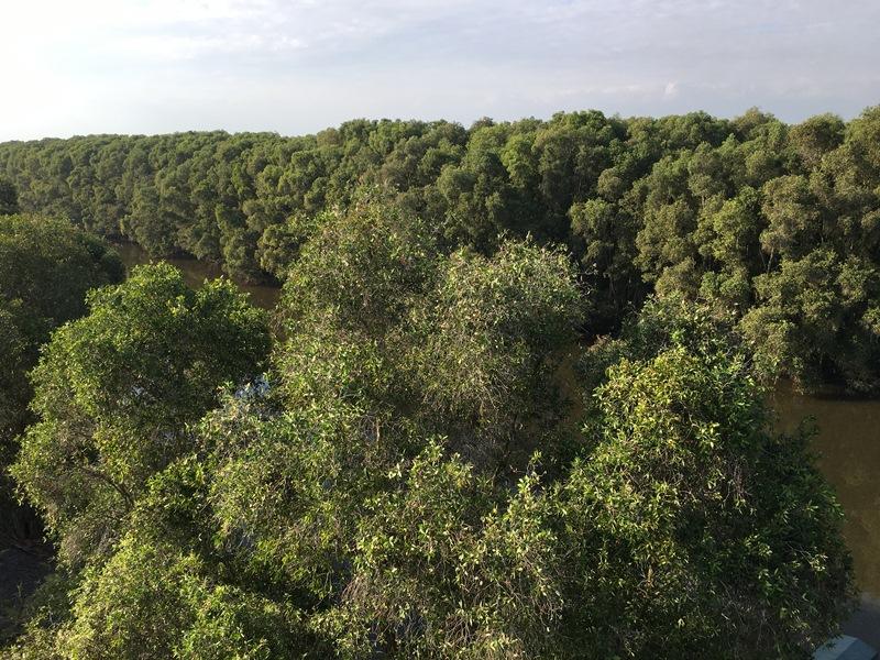 Cảnh báo nguy cơ cháy rừng ở khu vực phía Nam