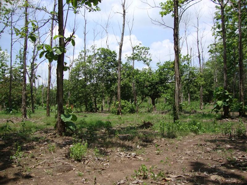 Đồng bằng sông Cửu Long ứng phó với nguy cơ cháy rừng