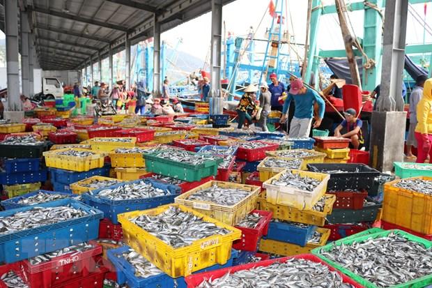 Ninh Thuận xây dựng nghề cá phát triển bền vững