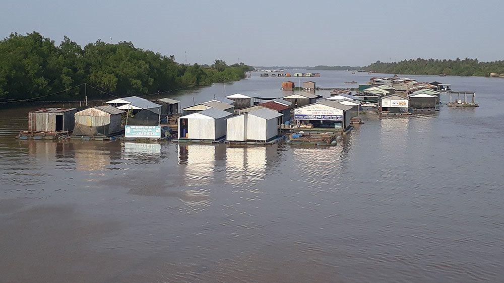 Nguy cơ sầu riêng ở Bến Tre bị ảnh hưởng do thiếu nước ngọt