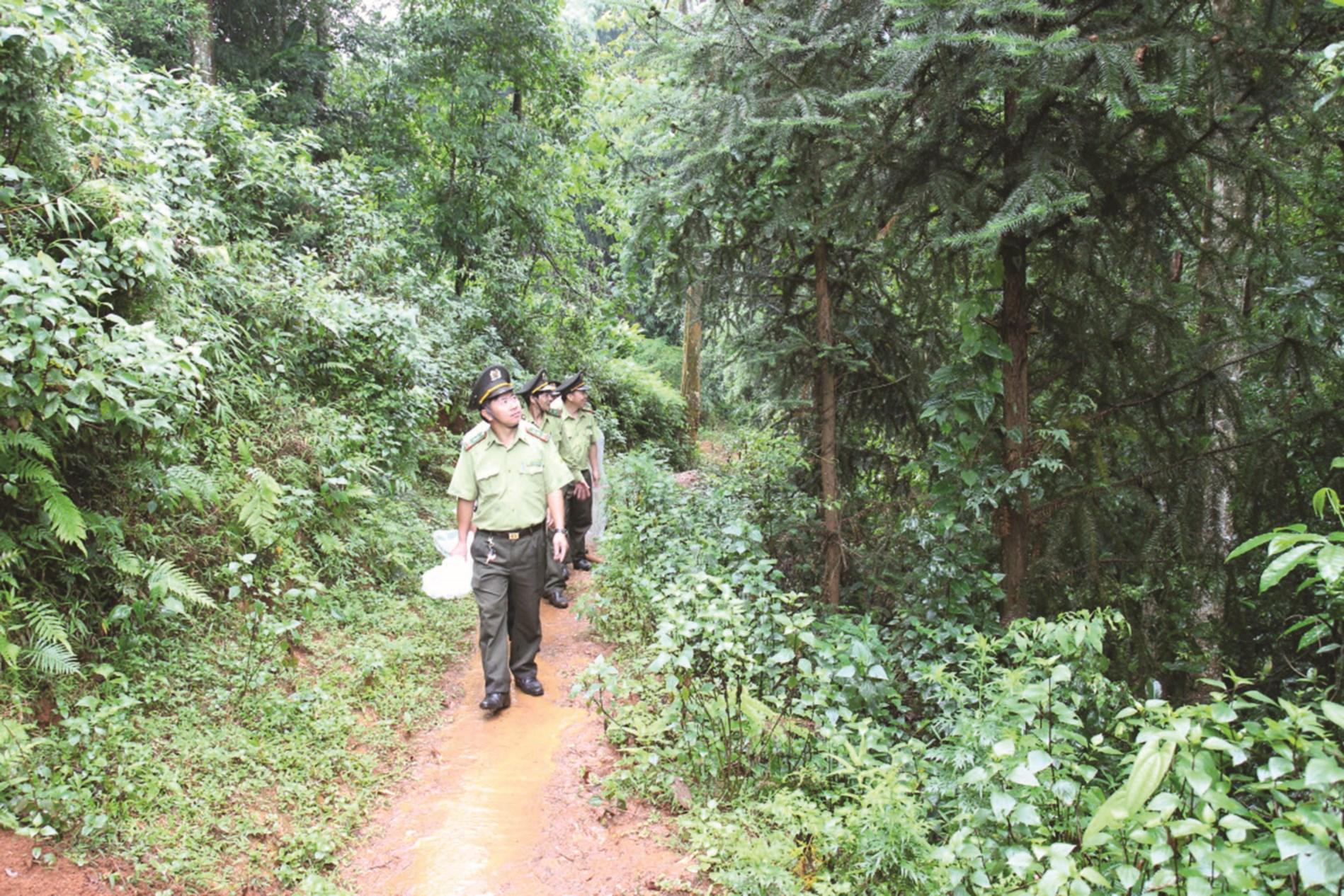 Yên Bái nâng cao trách nhiệm bảo vệ rừng