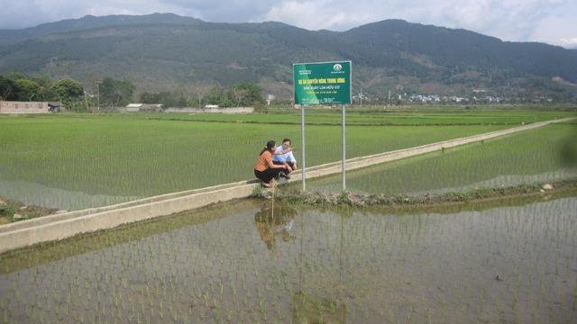 Phù Yên sản xuất gạo theo hướng hữu cơ liên kết chuỗi giá trị
