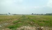 Thái Nguyên Chuyển 18,07 ha đất lúa sang đất phi nông nghiệp