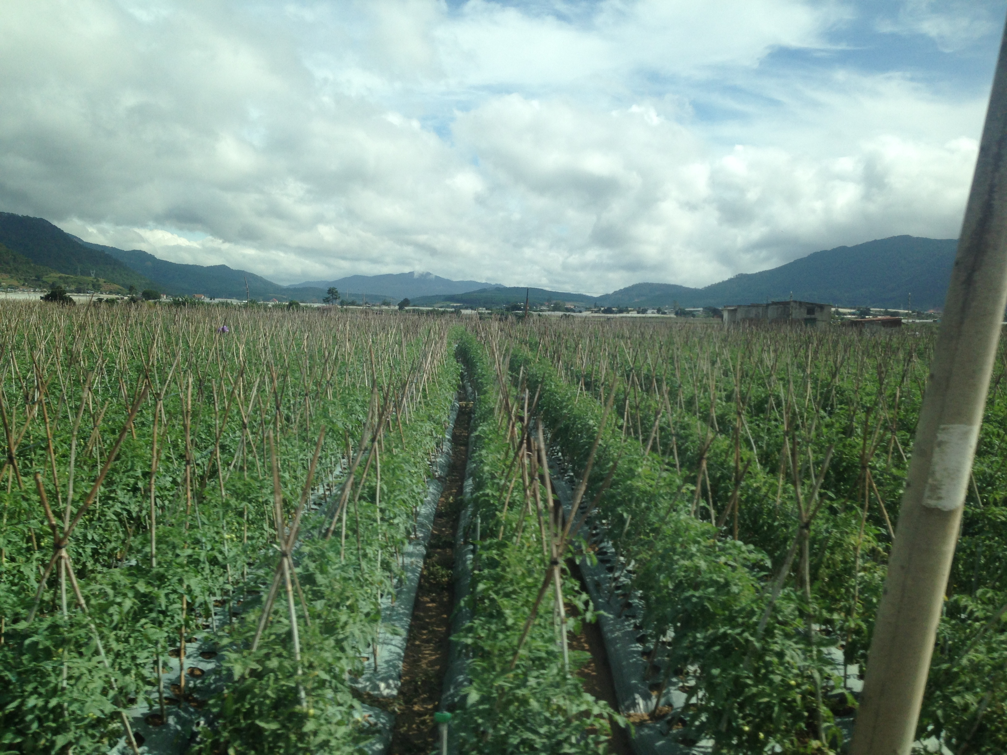 Đẩy mạnh ứng dụng khoa học, công nghệ trong nông nghiệp