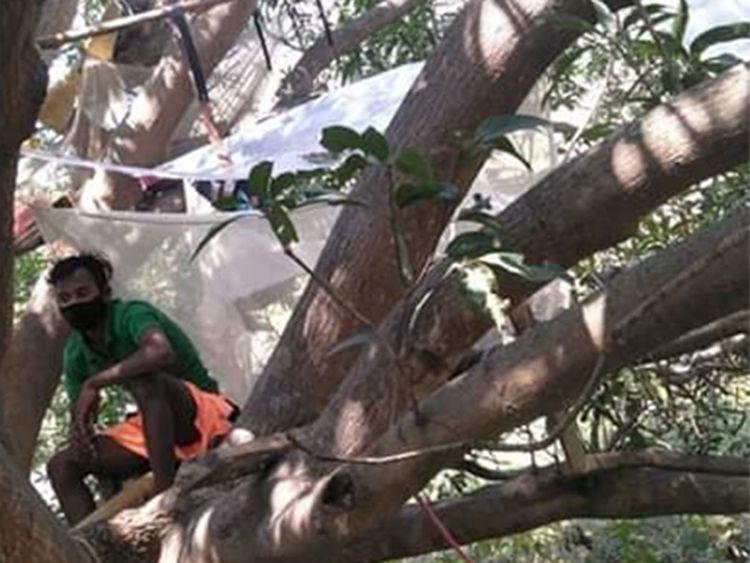 Ấn Độ Cách ly phòng chống COVID-19 trên cây