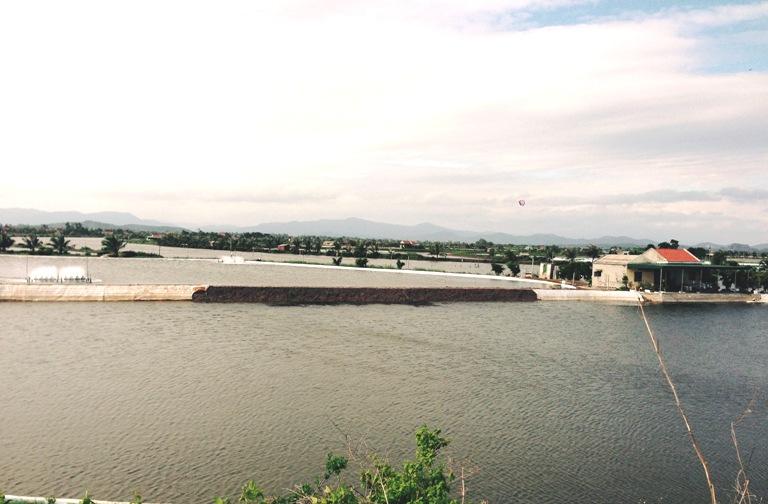 Chỉ đạo sản xuất tôm nước lợ thích ứng với điều kiện dịch bệnh COVID-19
