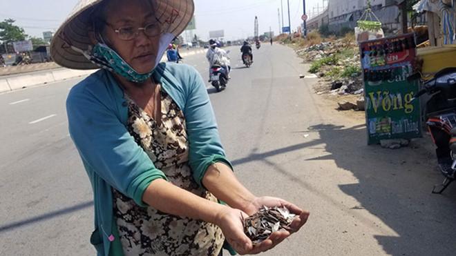 Điều tra, xử lý nghiêm người rải đinh trên quốc lộ 1 đoạn TP HCM - Bình Dương
