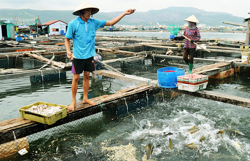 Phê duyệt Quy hoạch bảo vệ và khai thác nguồn lợi thuỷ sản, phát triển kinh tế biển