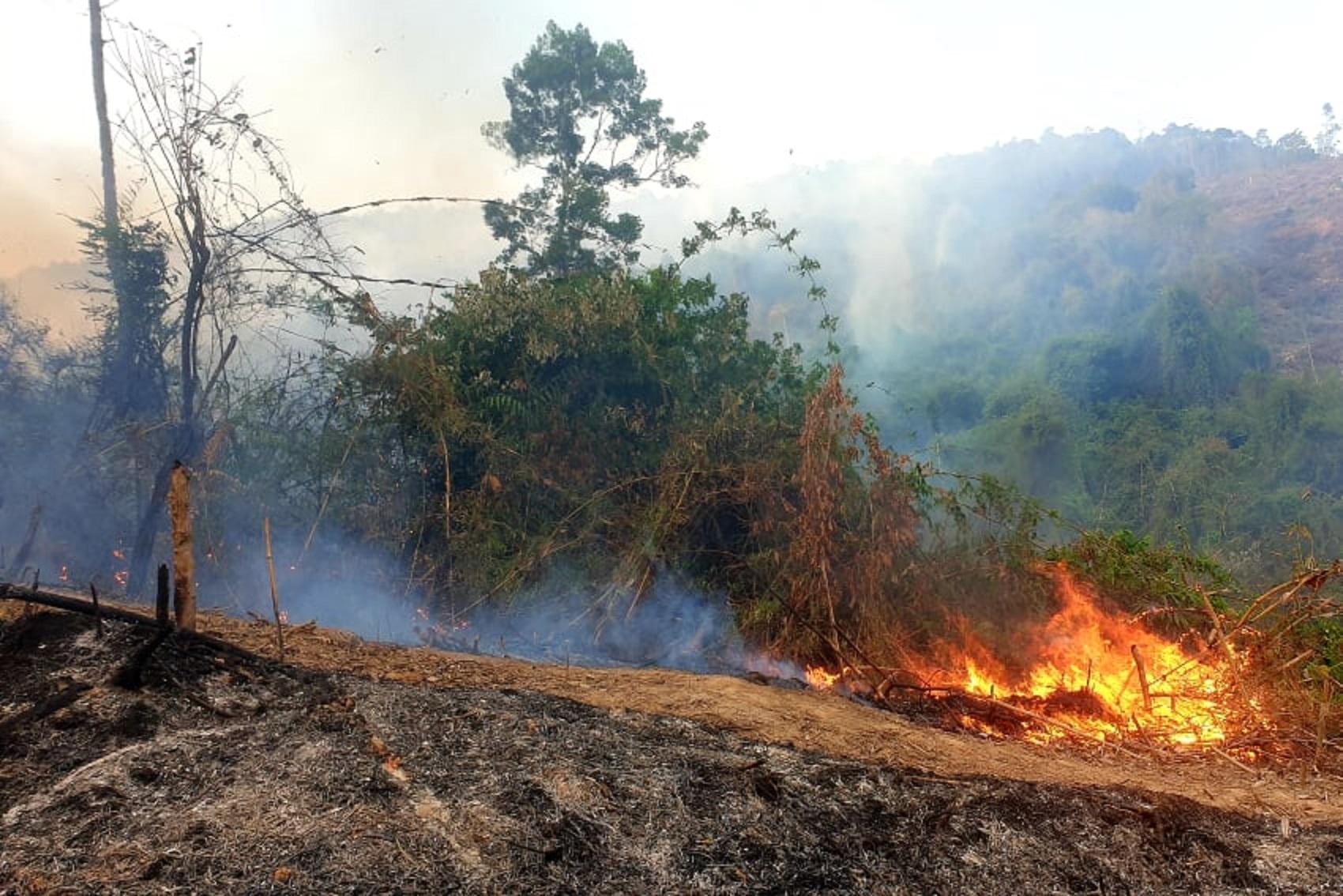 Cháy rừng phòng hộ do người dân đốt thực bì sau khi khai thác gỗ keo