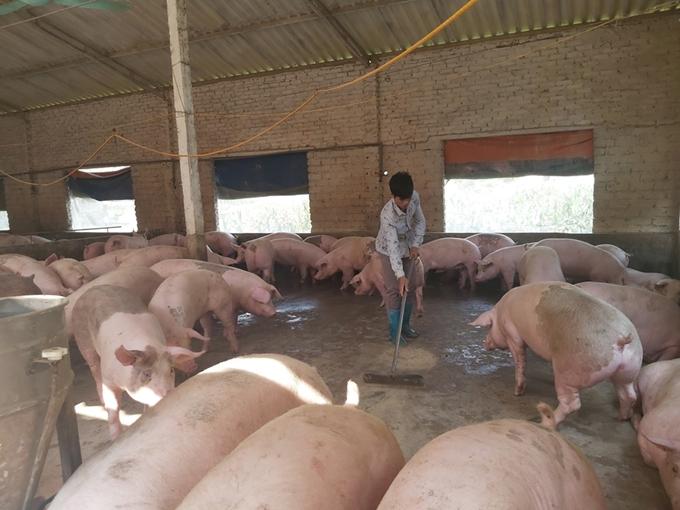 Bình ổn thị trường thịt lợn