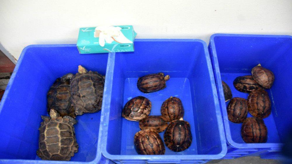 Phạt 5 năm tù đối tượng nuôi nhốt động vật hoang dã trái phép