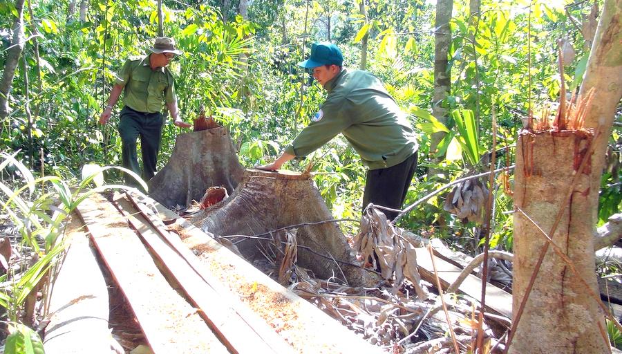 Phú Yên Chuyển hồ sơ vụ khai thác rừng trái phép sang cơ quan Công an