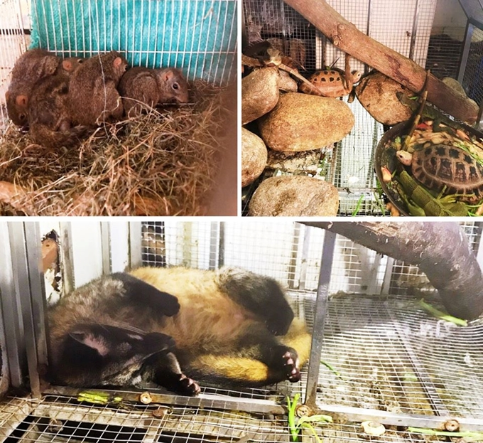 84 thông báo vi phạm về động vật hoang dã được phát hiện từ người dân