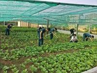 Mô hình tăng gia, chăn nuôi hiệu quả ở Trạm Ra đa 45