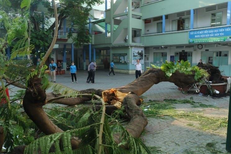 Bộ trưởng Bộ GD ĐT chia buồn, thăm hỏi học sinh bị tai nạn do đổ cây trong trường học