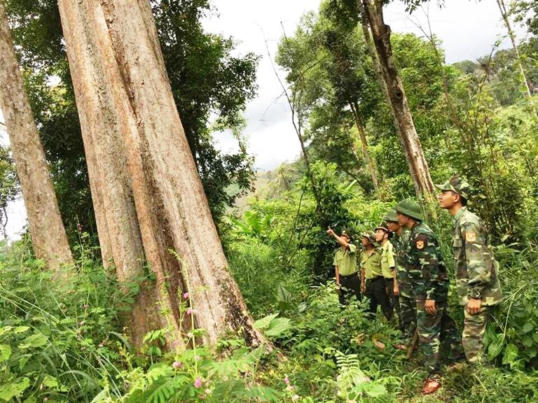 Triển khai ngay các biện pháp cấp bách phòng cháy, chữa cháy rừng