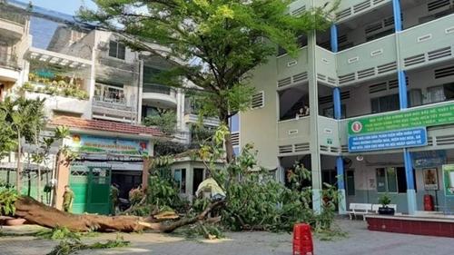 Luật sư nói về vụ cây xanh gẫy đổ gây chết người