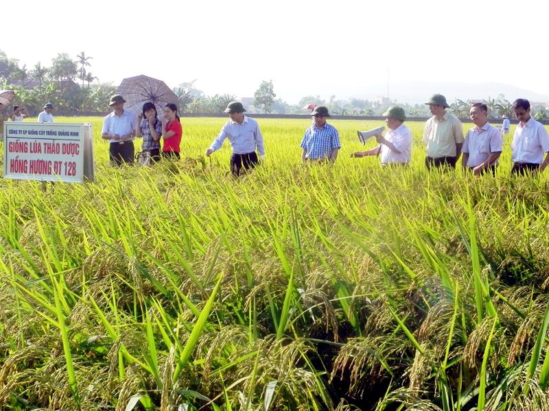 Phát triển sản xuất giống phục vụ cơ cấu lại ngành nông nghiệp