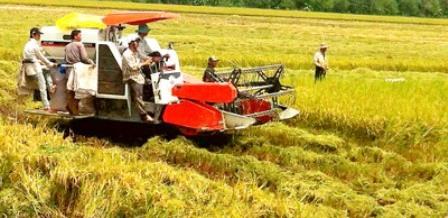 Đồng bằng sông Cửu Long Sản lượng lúa đạt trên 8,7 triệu tấn