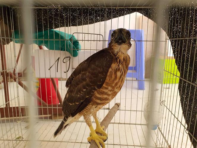 Bắc Kạn Tịch thu 20 cá thể chim săn mồi tại nhà dân  