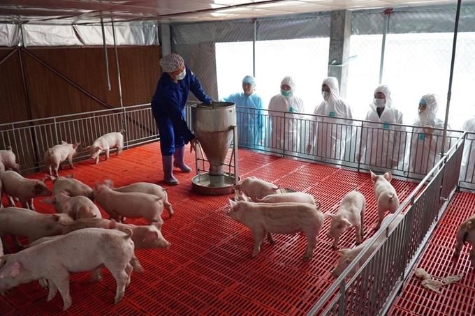 Cần làm gì để hạ nhiệt giá thịt lợn