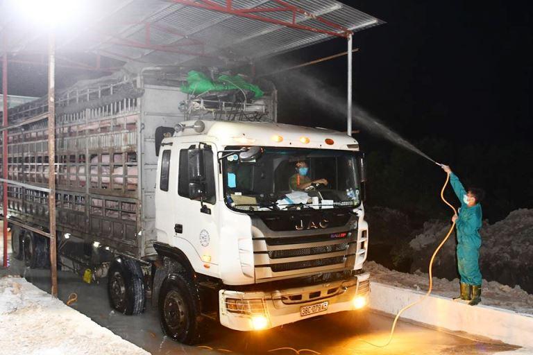 Từ ngày 12/6, cho phép nhập khẩu lợn sống từ Thái Lan