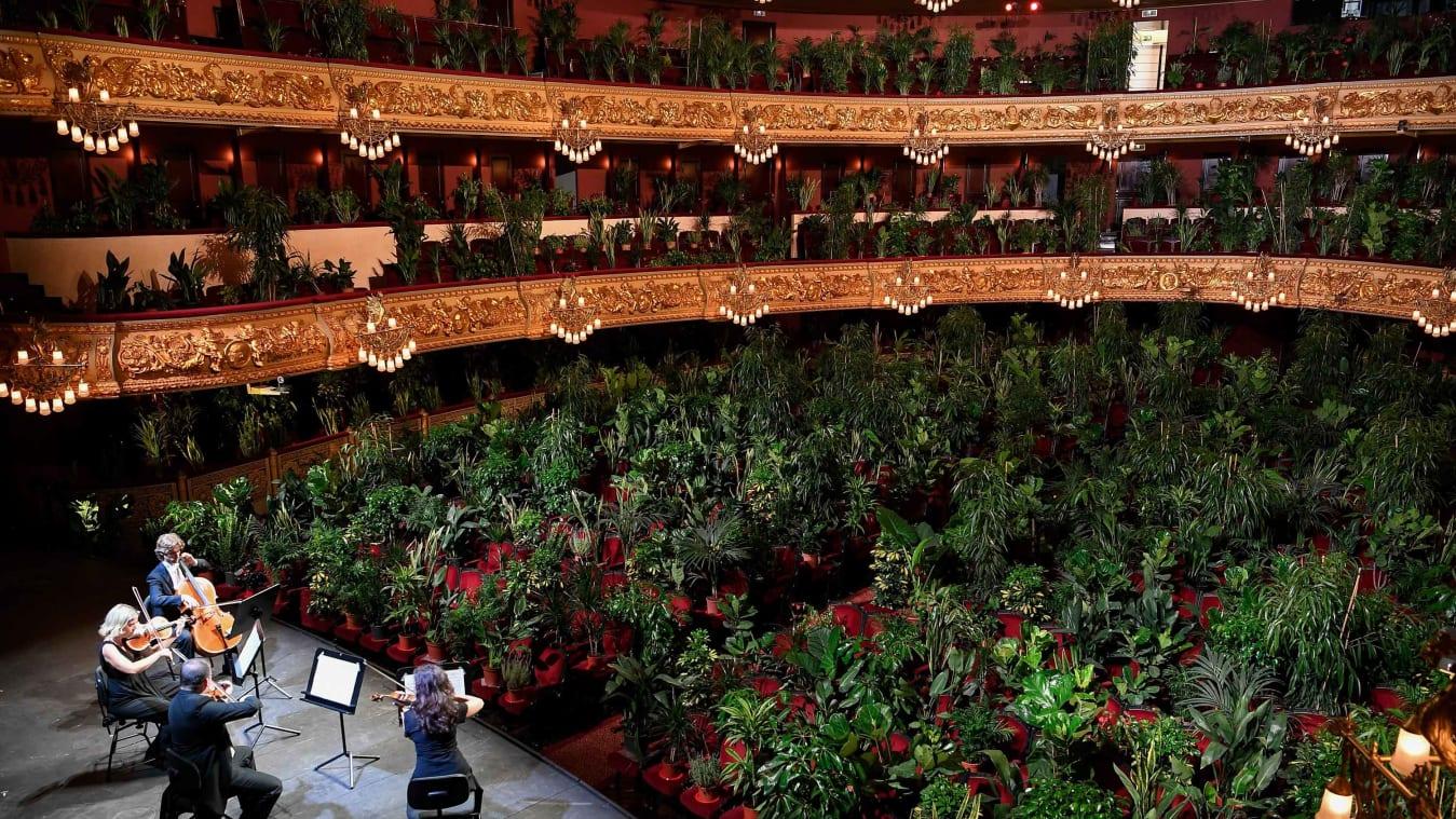 Buổi hòa nhạc đặc biệt trước hơn 2 000 cây xanh