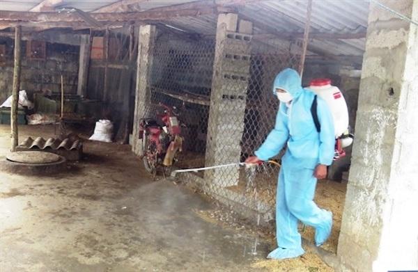 Ngăn chặn dịch tả lợn châu Phi tái phát