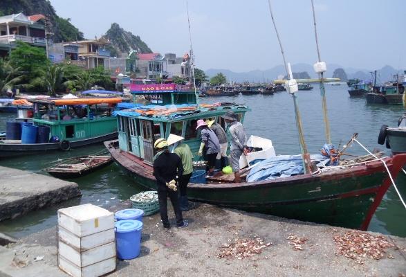 Thiết lập nền tảng cho quản lý tổng hợp vùng bờ tại một số tỉnh ven biển Việt Nam