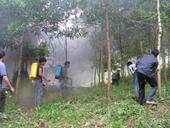 Thực hiện nghiêm các biện pháp về phòng, chữa cháy rừng
