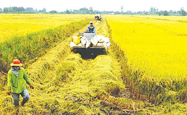 TP Cần Thơ Xây dựng nông thôn mới gắn với tái cơ cấu nông nghiệp