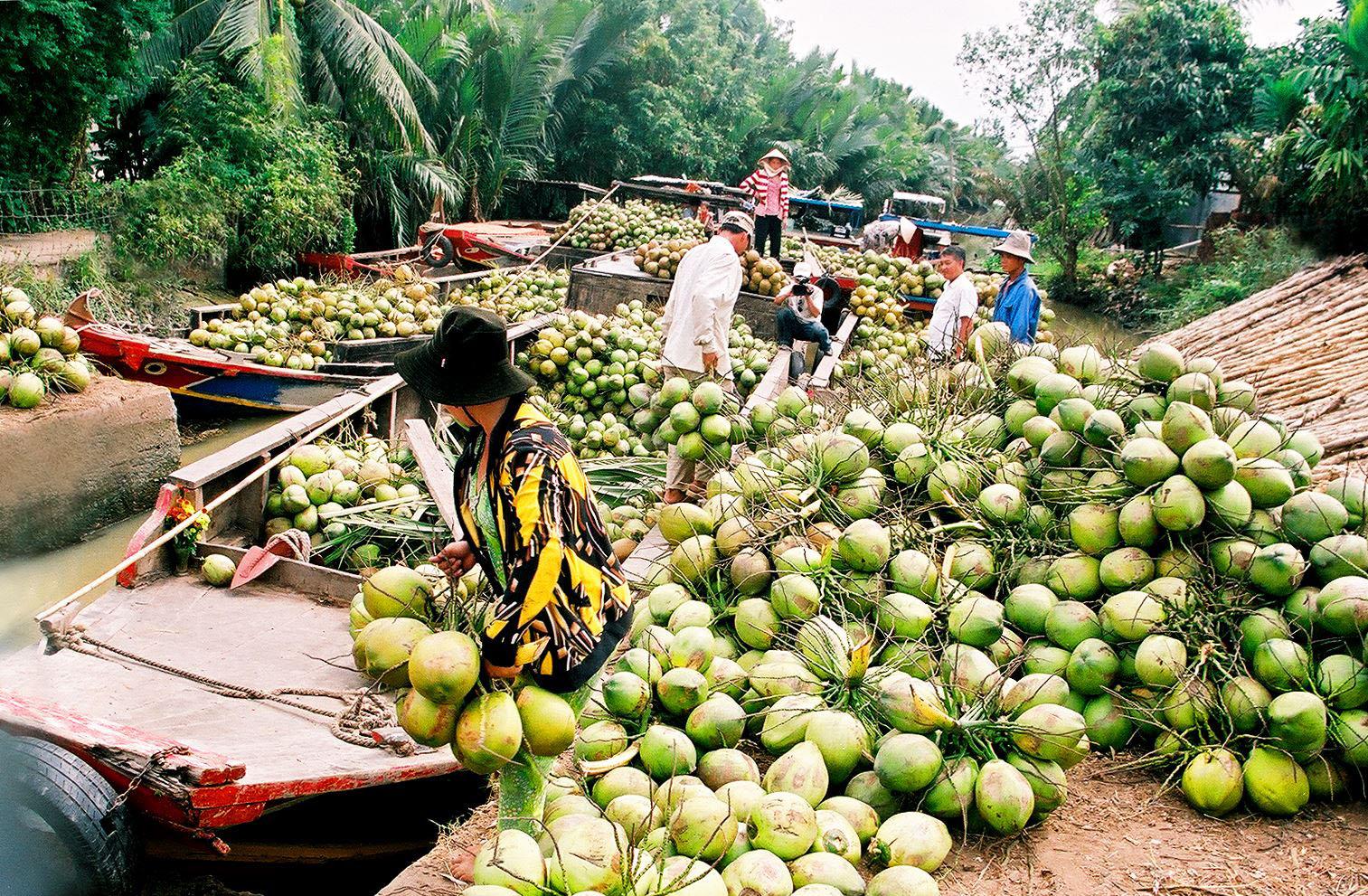 Xây dựng Bến Tre trở thành trung tâm trái cây đặc sản vùng Đồng bằng sông Cửu Long