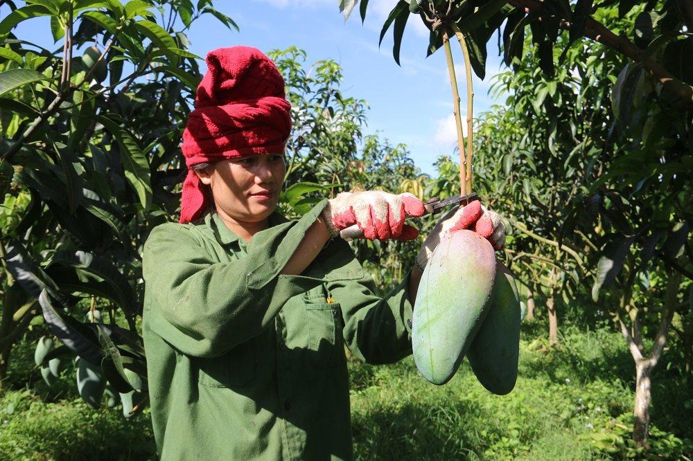 """Xuất khẩu nông sản mang đến """"hơi thở"""" mới cho nông nghiệp Sơn La"""