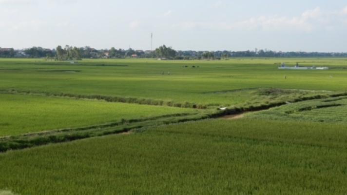 Thành lập Ban Chỉ đạo tổng kết thi hành Luật Đất đai và xây dựng Dự án Luật Đất đai