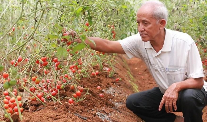 Đắk Nông Hình thành 5 vùng sản xuất nông nghiệp công nghệ cao