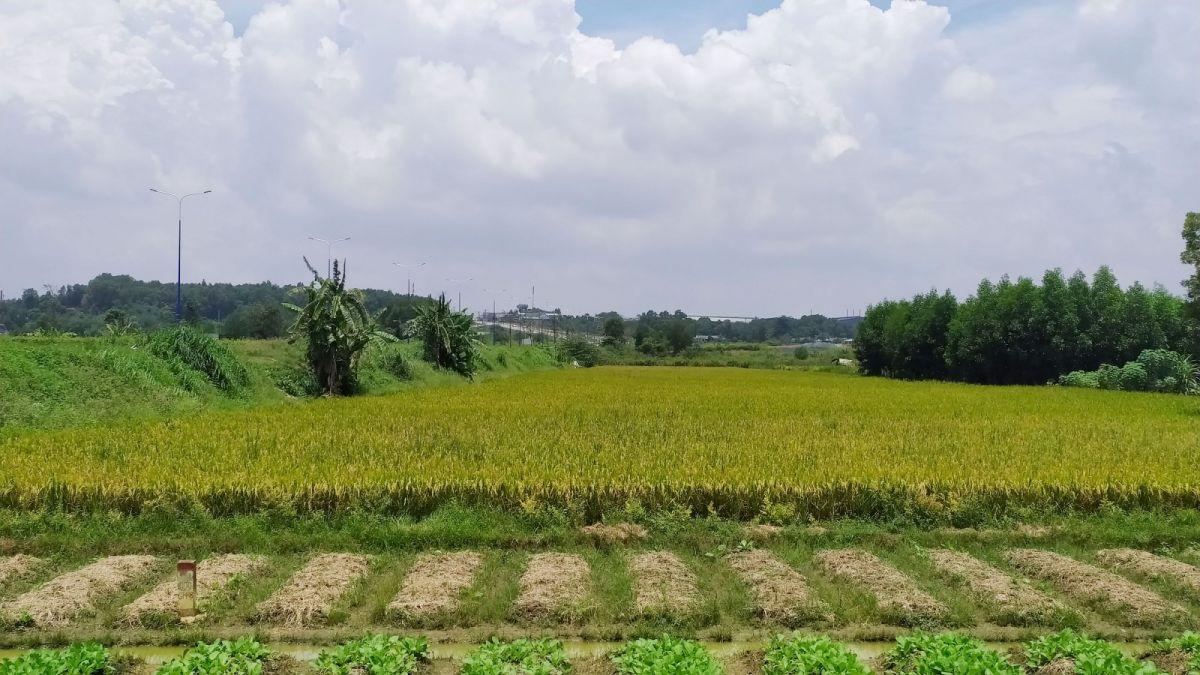 Chuyển mục đích sử dụng đất tại 3 tỉnh