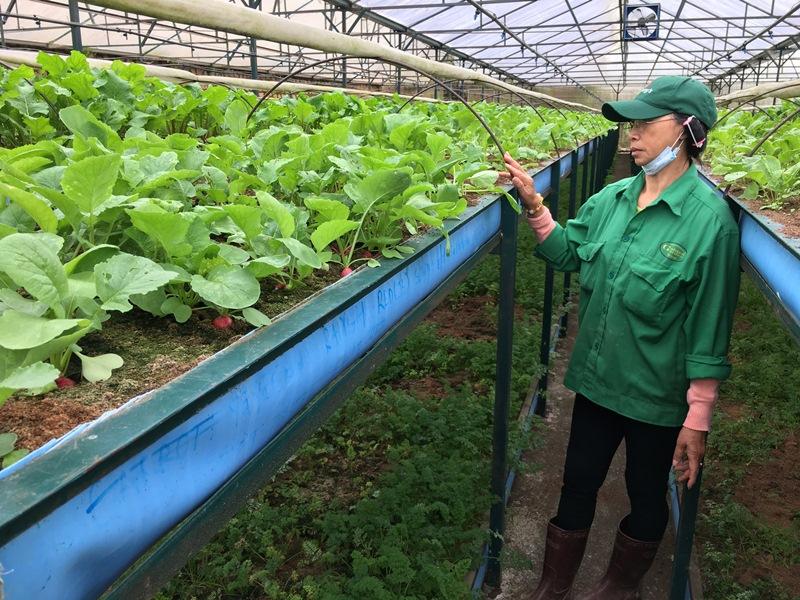 Nhiều công ty tham gia chuỗi cung ứng nông, lâm, thủy sản an toàn