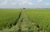 Chuyển đất lúa sang đất phi nông nghiệp ở An Giang và Thanh Hóa