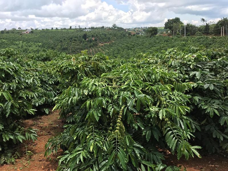 Đắk Nông Đẩy mạnh ứng dụng công nghệ cao trong nông nghiệp